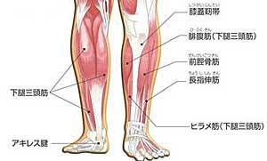 足関節筋肉