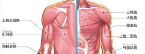 肩関節筋肉